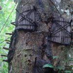 Погребальный лес на Бали